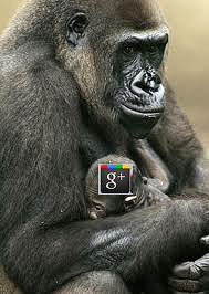 Mom Gorilla with baby with Google + icon on head